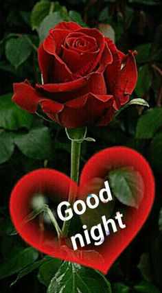 Good night sister and all,have a peaceful sleep God bless xxx❤❤❤✨✨✨🌙 Good Night Friends Images, Funny Good Night Images, Good Night Love Quotes, Cute Good Night, Good Night Gif, Romantic Good Night Sms, Sweet Good Night Messages, Beautiful Good Night Images, Good Night Sweet Dreams