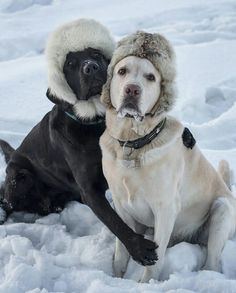 "15.9k Likes, 436 Comments - World of Labradors (@worldoflabs) on Instagram: """"Weather forecast in Irkutsk, Russia (Siberia): up to -40°C this upcoming weekend. Menfis and Tokyo…"""