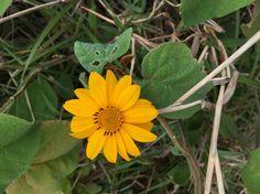 Trilha floripa ..flores pelo caminho.