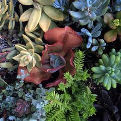 Rainbow babies  by sstolte #waterwise #waterwisegardening #drought #droughttolerant