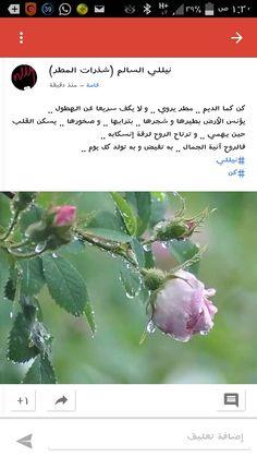 كن كما الديم .. مطر يروي .. و لا يكف سريعا عن الهطول .. يؤنس الأرض بطيرها و شجرها .. بترابها .. و صخورها .. يسكن القلب حين يهمي .. و ترتاح الروح لرقة إنسكابه .. فالروح آنية الجمال .. به تفيض و به تولد كل يوم .. #نيللي #كن