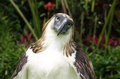 Fotos del Águila Comemonos