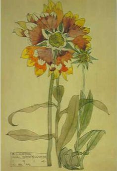 Plant Study ▫ Spurge / Withyham by Charles Rennie Mackintosh ▫ 1914