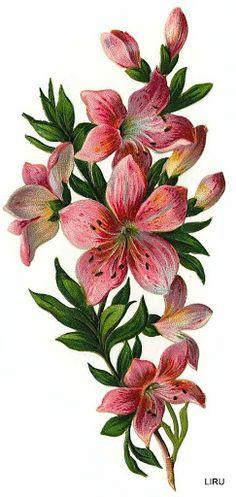 Vintage Lilies Scrap ~ LAMINAS... Y TRABAJOS CON FLORES (pág. 184)   Aprender manualidades es facilisimo.com