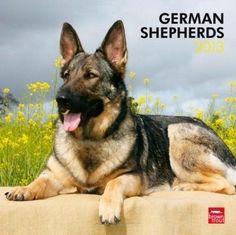German Shepherds 2013