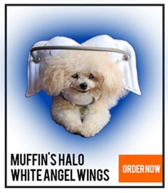 Muffin's Halo is a simple-to-use product that helps blind dogs from running into things.  It's a great idea!