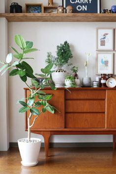 整然と整理された収納、選び抜かれた家具や雑貨。美しい部屋は日々SNSでもアップされていますが、欠かせないのがお部屋に奥行きと癒しを与えてくれる観葉植物です。インテリアの主役にもなる大きなグリーンを、お部屋に仲間入りさせてみませんか?