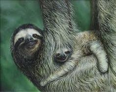 Mama & baby sloth!
