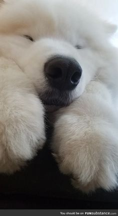 one hapy heckin cloud Super Cute Puppies, Cute Baby Dogs, Cute Dogs And Puppies, I Love Dogs, Cute Funny Animals, Cute Baby Animals, Animals And Pets, Fluffy Dogs, Fluffy Animals