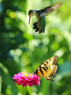 Hovering hummingbird above a butterfly and flower.