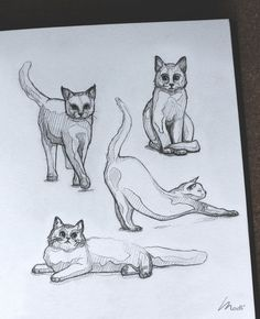 My Sketchbook Art Portfolio I Kitten, Kitty poses I Cat stre Pencil Art Drawings, Drawing Sketches, Sketching, Eye Drawings, Drawing Tips, Animal Sketches, Animal Drawings, Kunst Portfolio, Kitten Drawing