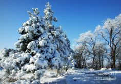 Winter Photograph - Winter by Camelia C