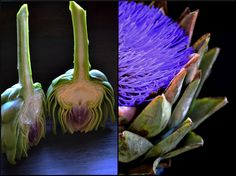 Food Tip~Taming the Artichoke  @Magicalspice