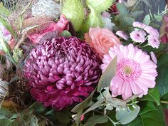 Blumen Chrysantheme