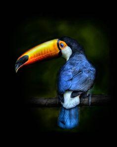 TOUCAN BIRD........