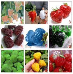 Vegetables and fruit seeds Strawberry seeds 10000 pieces seeds of each color seeds grain Bonsai plants Seeds for home & garden