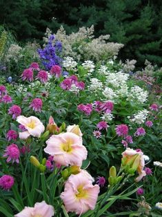 Planning a Perennial Garden, where to start ? Well, admittedly it can be a little intimidating , but relax, it's really not that difficult if you just foll #perennialgardenplanning #littlegardens #LittleGardenDesign
