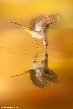 Gorgeous! #birds #bird #nature #animals #photography #gold #orange #brown #yellow
