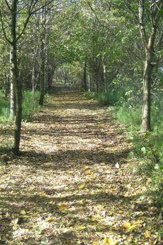 FUSIGNANO - Il bosco (foto Archicio Comunale)