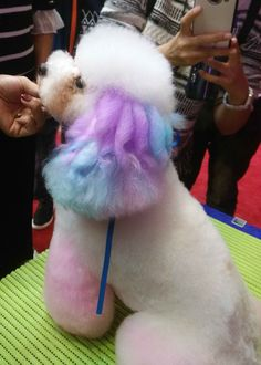 Pink Animals, Animals And Pets, Funny Animals, Cute Animals, Poodle, Dog Dye, Cute Puppies And Kittens, Creative Grooming, Pet Grooming