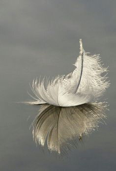 Feather..
