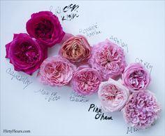 Pink Garden Rose Study with Alexandra Farms David Austin Roses Bouquet, Floral Wedding, Wedding Bouquets, Pink Garden, Garden Roses, Pink Rose Bouquet, Bouquet Flowers, Color Magenta, Rose Trellis