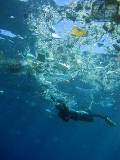 Why Teach About Marine Debris? by Anna Manyak :: baybackpack