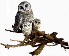 SOOTY OWL and owlets Ceramic/Wood HANDMADE . by ArleneDelahentyArt, $495.00