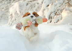 playing fetch in the snow
