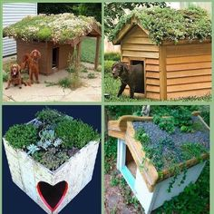 living pet house keeps pets cool too.