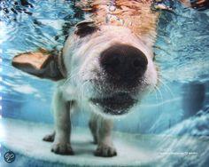 Underwater Dogs, Seth Casteel