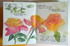 Botanical painting by Krzysztof Kowalski: My old sketchbook and curcuma