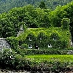 Ivy on buildings: for or against?
