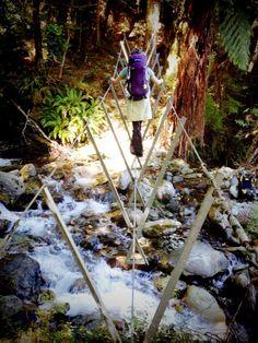 three wire bridge on hollyford track, new zealand Ebook: 9 Great Walks Of New Zealand http://newzealandwalkingtours.com/ebook/