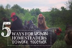 5 Ways for Urban Homesteaders to Work Together + a great resource for homesteaders!!