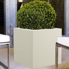 Artificial plants can just be left to sit in your room and look beautiful without the need to prune or water them. https://www.yuccabeitalia.com/