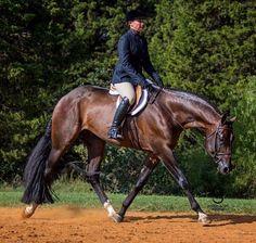 Love you Shannon! American Paint Horse, American Quarter Horse, Pretty Horses, Beautiful Horses, Quarter Horses For Sale, Hunter Under Saddle, Hunt Seat, Horse Riding Clothes, Western Pleasure