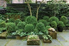 julianne moore garden new york 04 Reclaimed bluestone pavers anchor the terrace, which is ringed by raised beds of boxwood and ivy