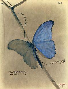 """ Laszlo Layton, Blue Morpho Butterfly (After Heade), 2003 """