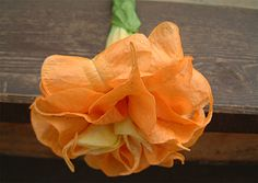 """Herrenhauser Garten""  Beautiful double orange brugmansia."