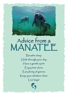 Advice from a ManateeBlank Greeting Card Front: Advice from a MANATEE: Breathe deep. Have a gentle spirit. Irish Quotes, Son Quotes, Life Quotes, Advice Quotes, Meaningful Quotes, Inspirational Quotes, Motivational, Animal Symbolism, Native American Quotes