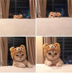 Here is a collection of cute and funny cats of the year that will definitely be loved by the cat lovers. Explore the funniest cat pictures below here. - Page 4 of 10 Cute Kittens, Cute Baby Cats, Silly Cats, Cute Baby Animals, Funny Cats, Funny Animals, Humorous Cats, Wild Animals, Cute Cat Memes
