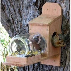 NutHouse Squirrel Jar Feeder - Great Gift and Entertainment for You and Your Squirrels