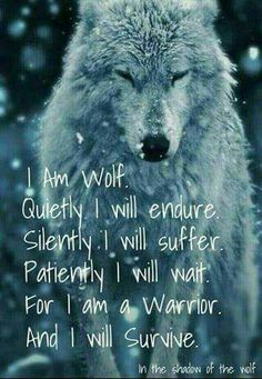 Beautiful wolves and wolf quotes   Shadow's Wolf Pack Amino