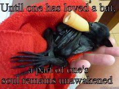 Until one has loved a bat. . .