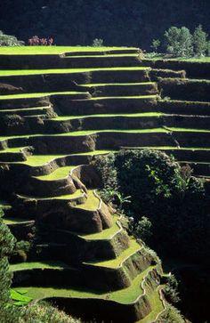 Rice terraces, Ifugao Province, Philippines    Rice terraces, Ifugao Province.