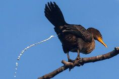 What Is a Bird's Cloaca?