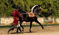Historial | FAR, Lusitano Horse, Cavalo Lusitano, Portugal