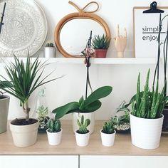 On met toujours les petits nouveaux au 1er rang butin de chez #Ikea : un dracaena marginata (à mes souhaits), 3 mini cactus (ils sont en lot de 3, j'ai refait mon mix perso pour avoir ceux que je préférais j'avoue ) et une petite aloé. Va falloir organiser tout ça maintenant  #cactus #succulent #plant #homegarden #aloevera #aloes #madecoamoi