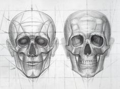 Human Skull / Stages of drawing construction - detail I